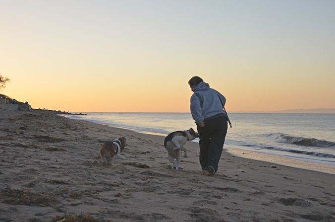 catchdogs